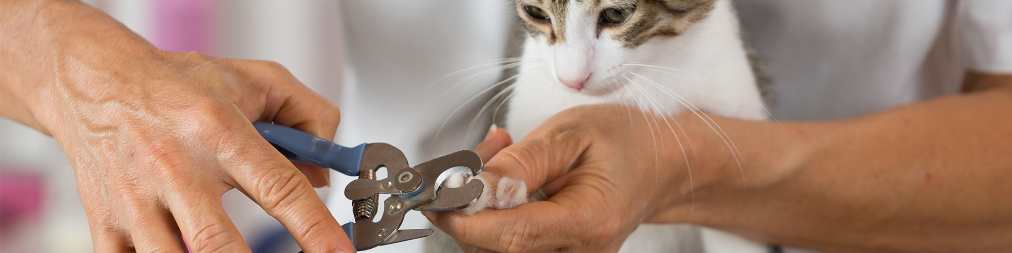 Cat Getting Nails Clipped
